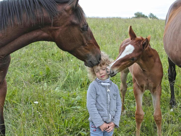 Двойной поцелуй животные, прикол