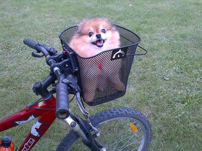 3. Первая в этом году поездка на велосипеде весна, животные
