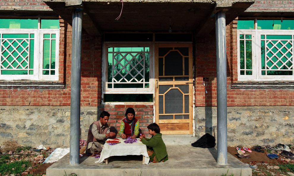 shaffron15 Шафран, сокровище из Кашмира