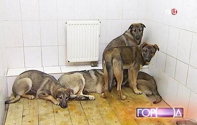 Москва возьмет бездомных животных на пожизненное содержание