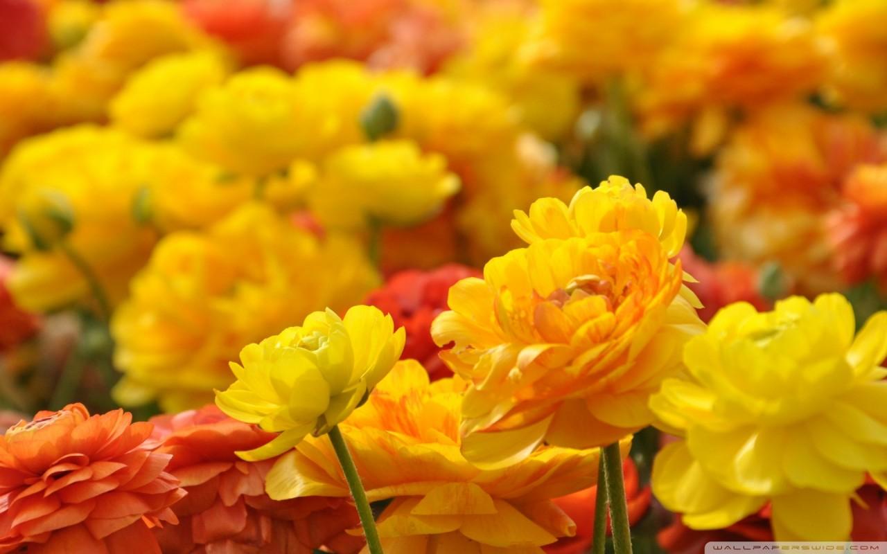 Цветы — улыбка Создателя