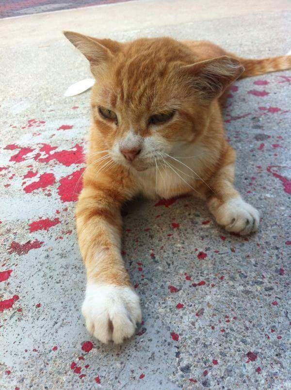 кот лежит в краске, HoneyFlower