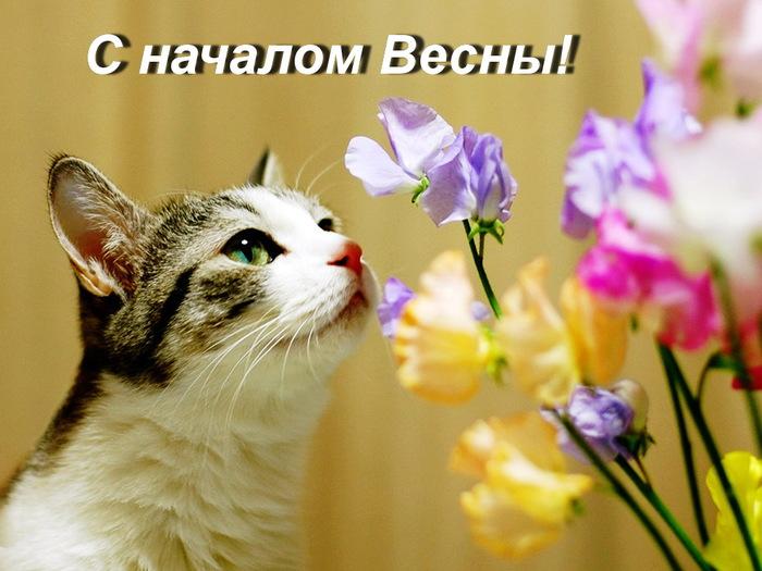 День котов!