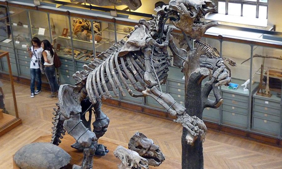 Четырёхтонный плотоядный ленивец и ещё 9 вымерших существ, которые не динозавры, но такие же страшные