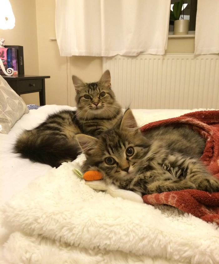 36. Мама с дочкой котенок, кошка
