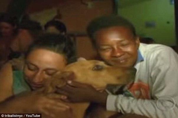 Каждую ночь самоотверженная собака проходит опасный путь, чтобы накормить своих друзей