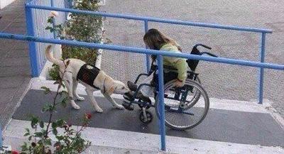 Если кто-то спросит, почему собака лучший друг человека, покажите ему это фото