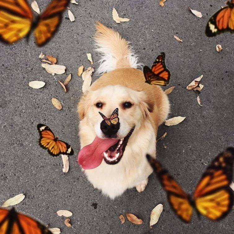 Бабочки в животе и на носу в мире, добро, животные, красота, люди, позитив, природа, фото