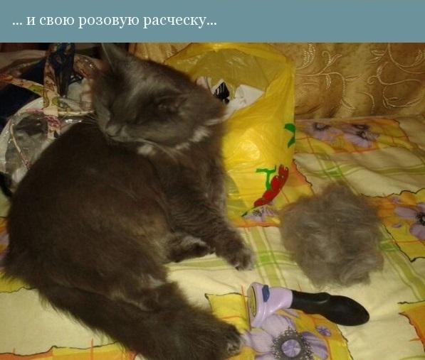 Жил-был кот... жизнь, кот, семья