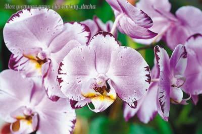 Орхидеи для начинающих: 8 пр…