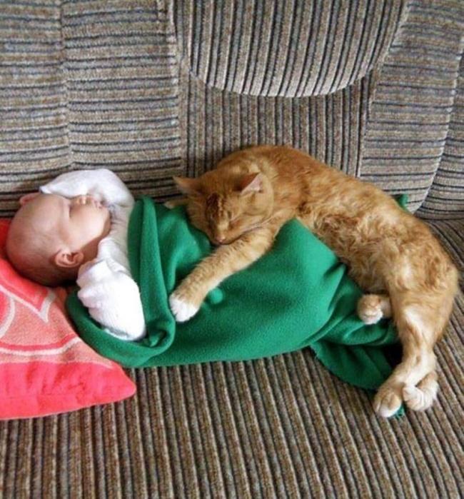 17 котов, из которых получились прекрасные няни.