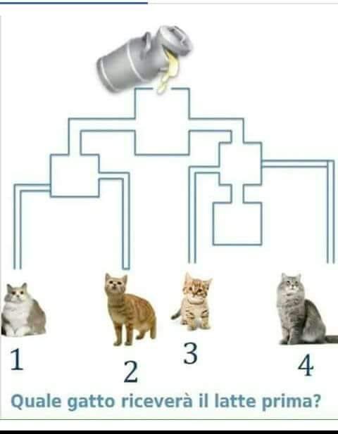 Какой кот сбежит первым?)