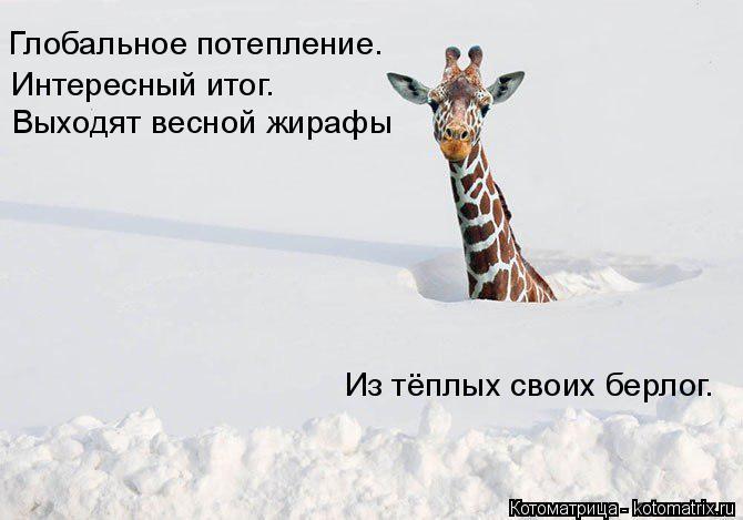 Котоматрица: Глобальное потепление. Интересный итог. Выходят весной жирафы Из тёплых своих берлог.