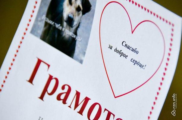 В рязанской школе №70 собрали почти полтонны корма для бездомных собак .