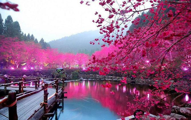 Самые впечатляющие деревья в мире