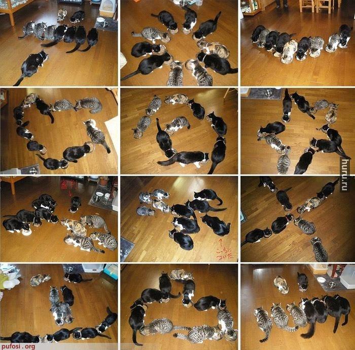Как нужно фотографировать котиков:)