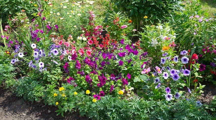 Клумба с однолетними растениями
