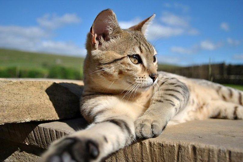 Тайная сила кошек: правда ил…
