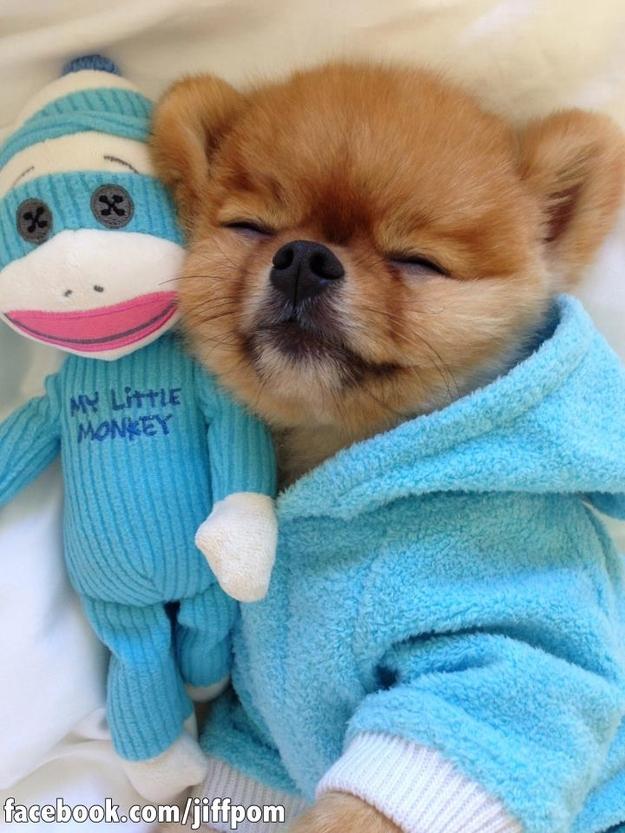 happydog 1 Самая счастливая собака на свете