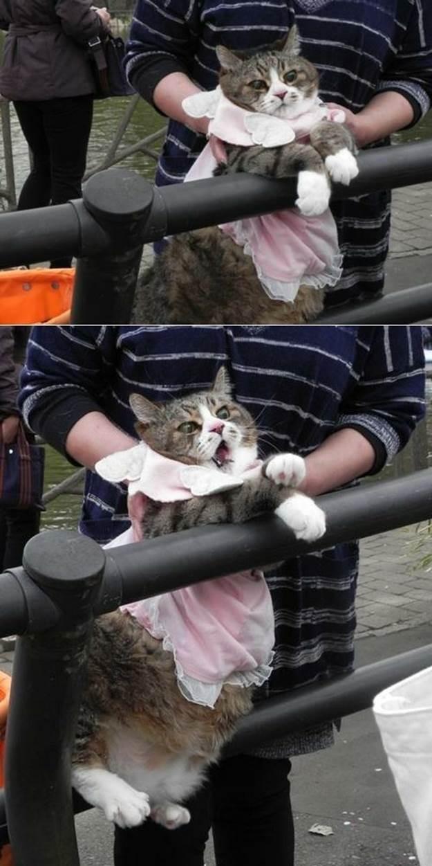 lolcats97 100 лучших фотографий кошек всех времен и народов