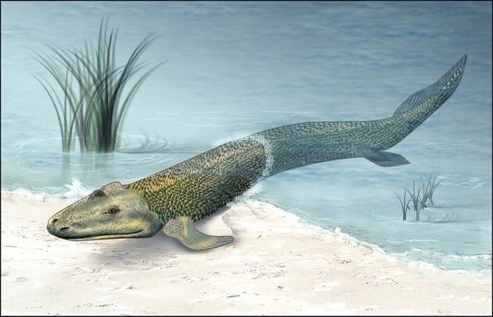 3. Первые виды существ, которые начали ходить по земле — тиктаалик и пневмодесмус животные, земля, наука, эволюция