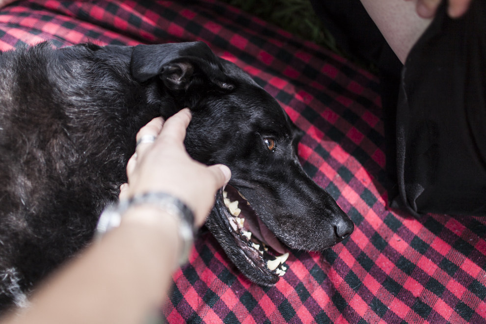 Последний день в жизни этой собаки учит нас жить каждый день так, будто он последний.