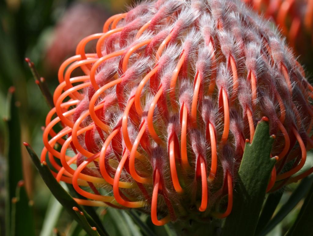 Удивительная красота растений