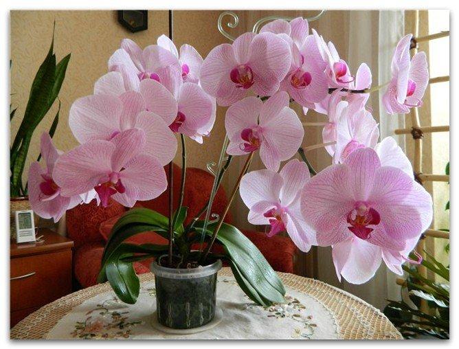 Возвращаем цветок к жизни: как можно реанимировать орхидею в домашних условиях