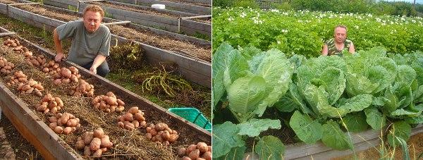 Картошка и капуста у Лядова