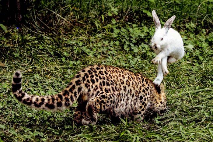 Животные в новостях: тыквенный кот, улыбка бэтмена и гимнастика жирафов