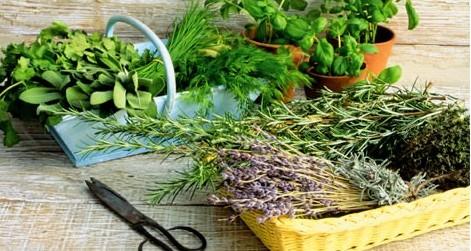 СЕКРЕТЫ КРАСОТЫ. Травы для красивых и здоровых волос
