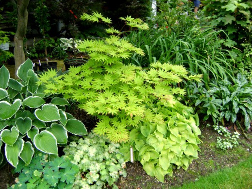 Светлолистные растения в садовых композициях
