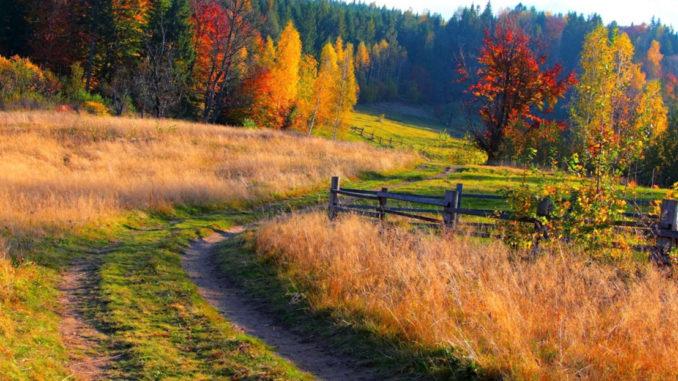 Какие лекарственные растения заготавливают осенью?