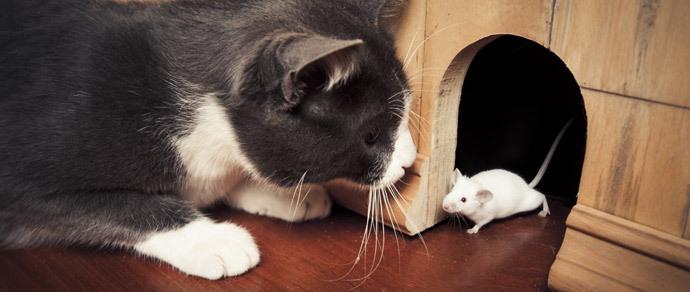 Россияне вживили мыши распечатанную на 3D-принтере щитовидку