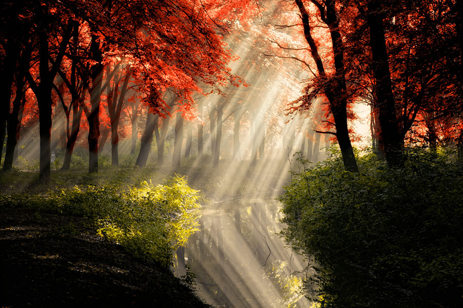 Лес в пейзажной фотографии Ларса ван де Гура