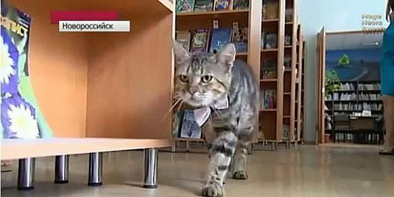 slujebniekoti 4 Служебные коты