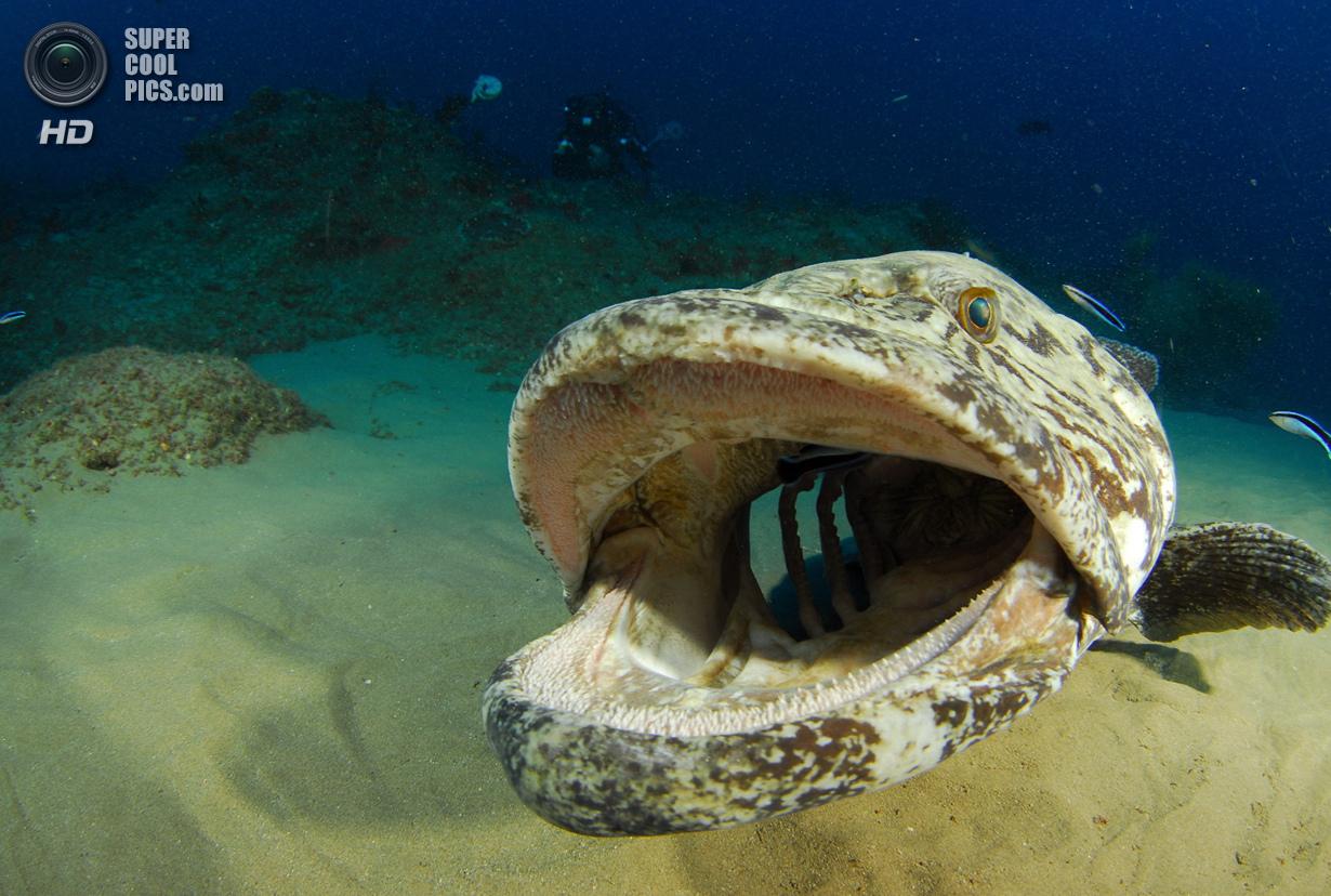 Категория: Wide-angle/Marine Life. 3 место. (Valda Fraser/UnderwaterPhotography.com)