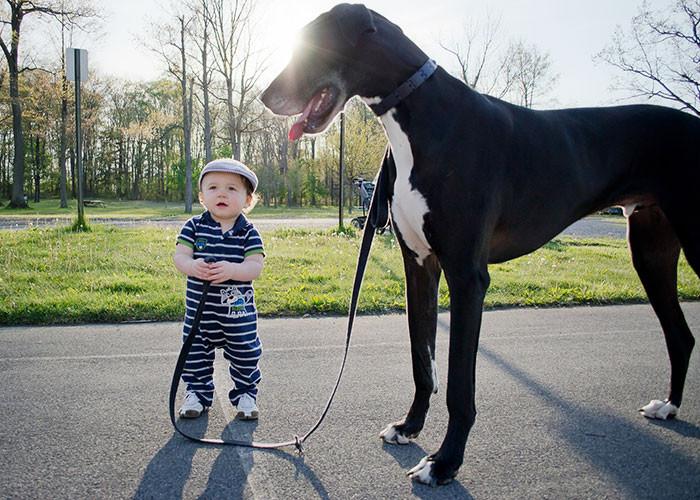 На прогулке дружба, ребенок, собака