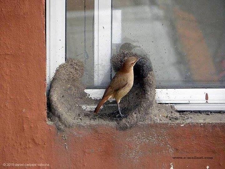 Построил дом, привел жену. Мужик! животные, история, прикол, сделай сам, факты, юмор