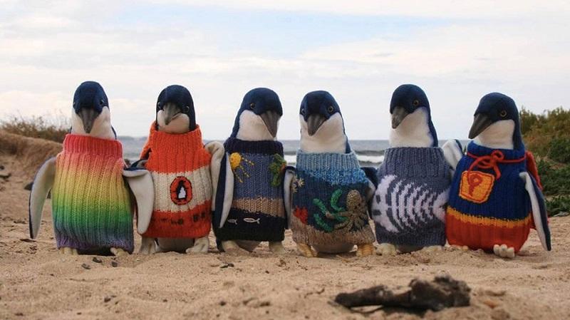 109-летний старичок вяжет свитерки для пингвинов... И ты сильно удивишься, когда узнаешь зачем!
