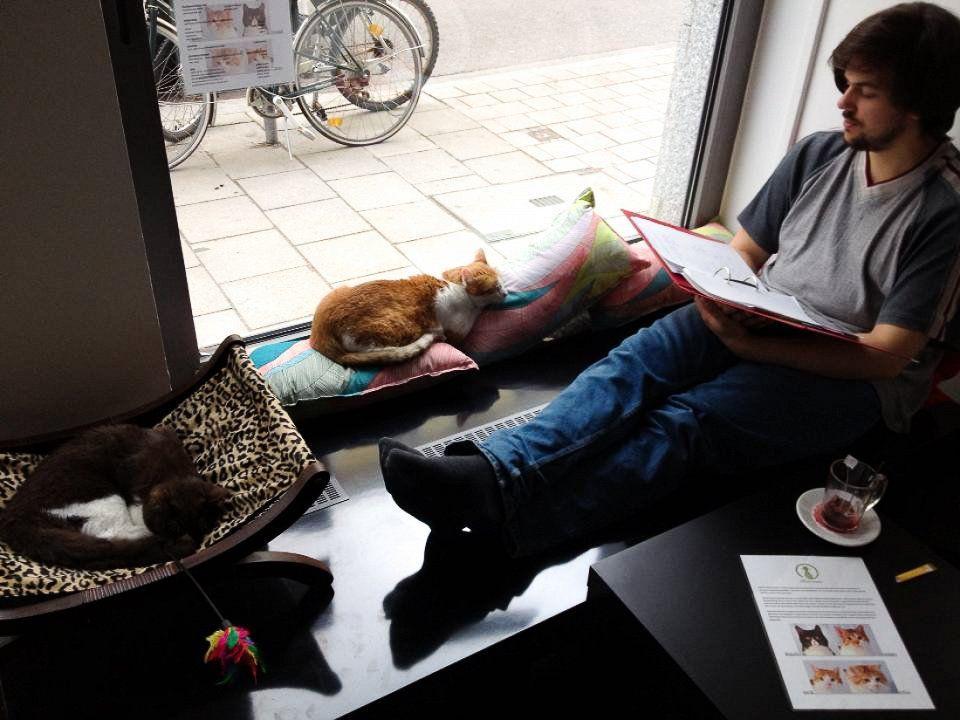 catcafe10 Самые необычные «кошачьи» кафе из разных стран мира
