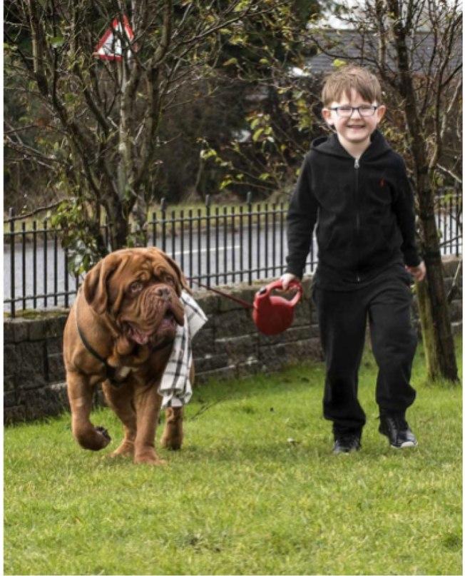 Родители заметили, что пес всегда находится справа от мальчика. Оказалось, он кое-что знал!