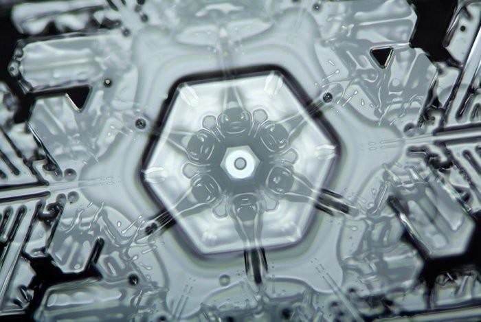 8. Ядро снежинки, похожее на цветок Линден Гледхилл, микроскоп, фото