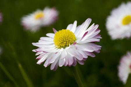 Цветы без рассады