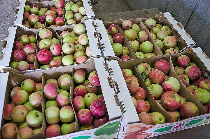 Китайские производители начали поставки яблок в Россию и Белоруссию