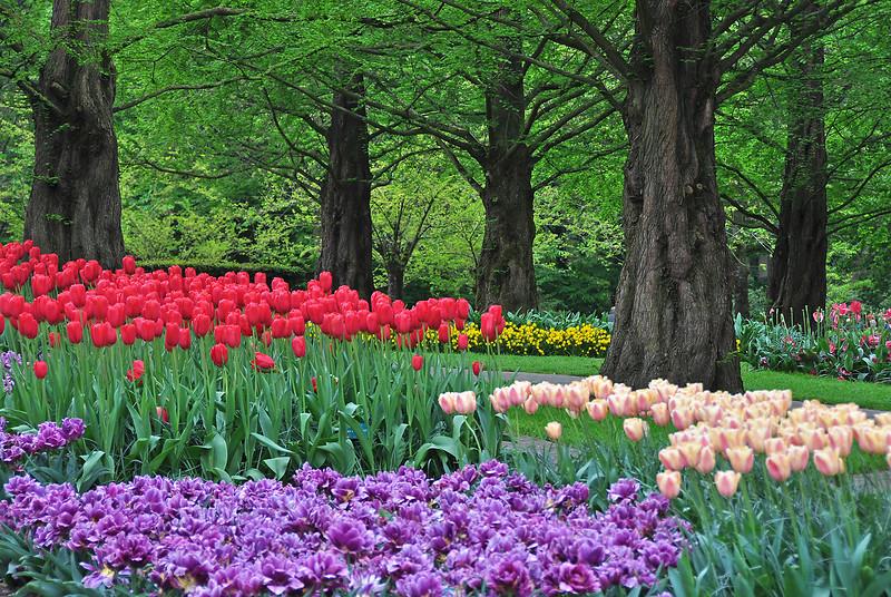 Весны цветочные шаги