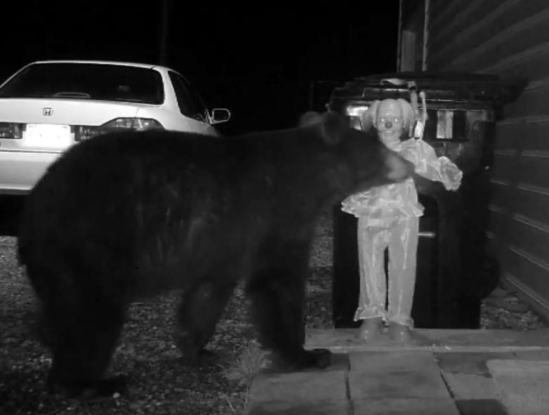 Мужчина прогнал медведя от своего мусорного контейнера с помощью жуткой куклы клоуна