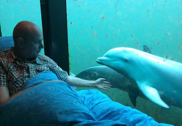 """Последнее желание: """"Посмотреть, как играют дельфины"""" желание, исполнение, организация"""