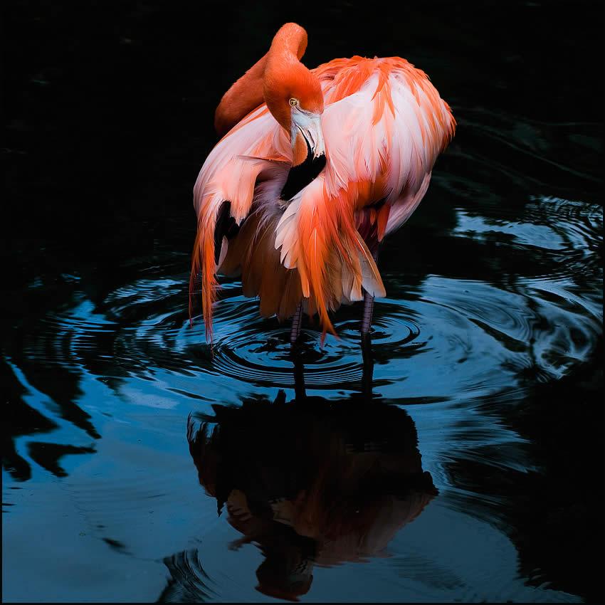 Это красочная птица