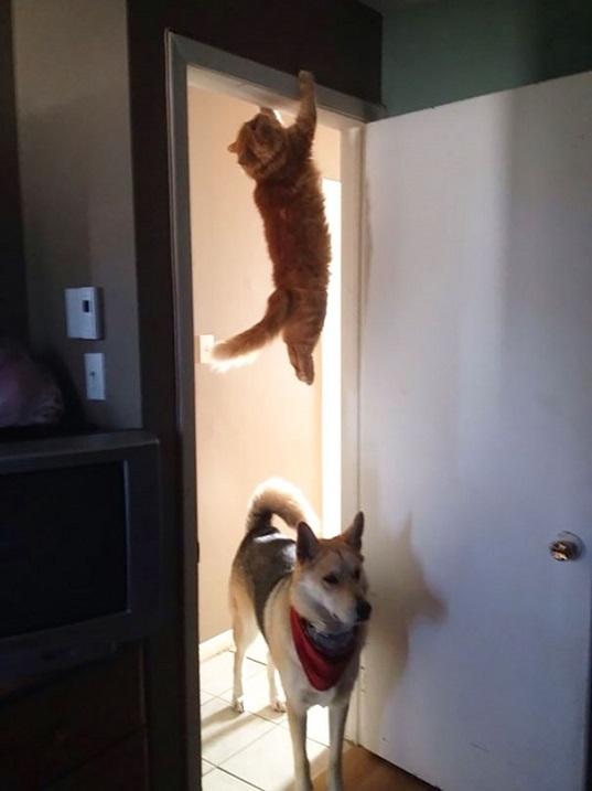 Коты-ниндзя